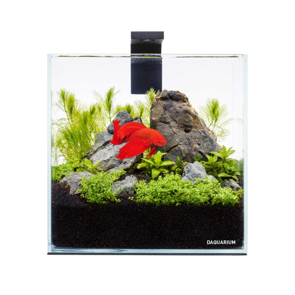 Collar Aquarium Set Pico 5L