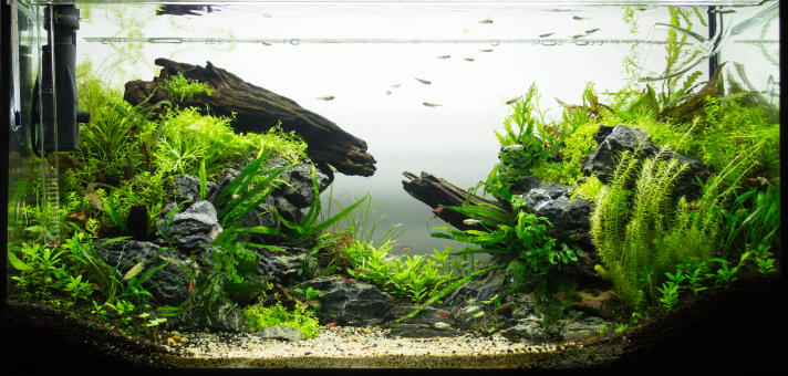 aquascaping-grundlagen