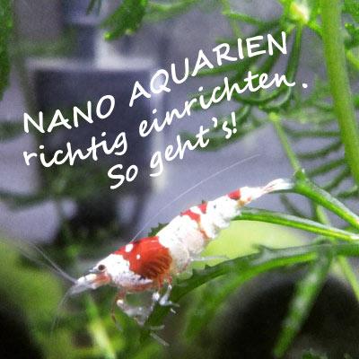 nano aquarium einrichten ratgeber