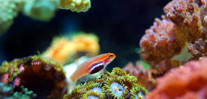 nano-riff-aquarium-einrichten
