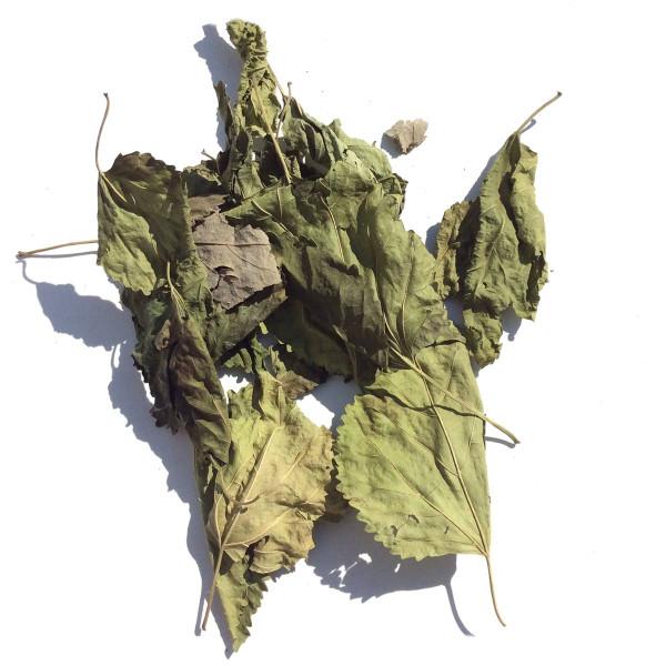 Maulbeerblätter für Garnelen