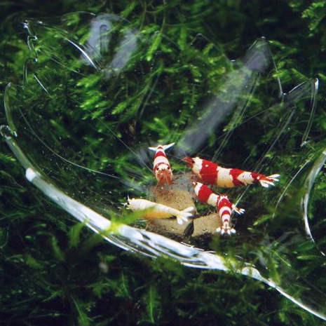 Aquarium Futterschale in Blattform für Garnelen und Krebse
