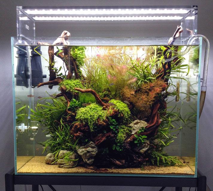 aquascaping-aquarium