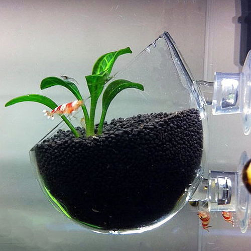 Plant Glass Pot - Aquarium Deko Gefäß